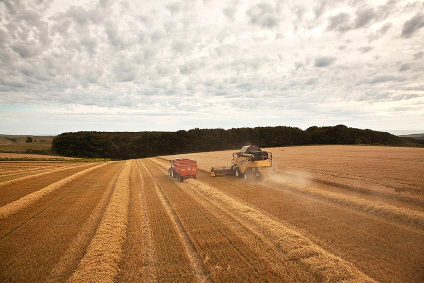Barley - Environmental Sustainability Promotion